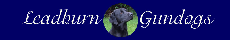 Leadburn Gundogs. Labrador retrievers